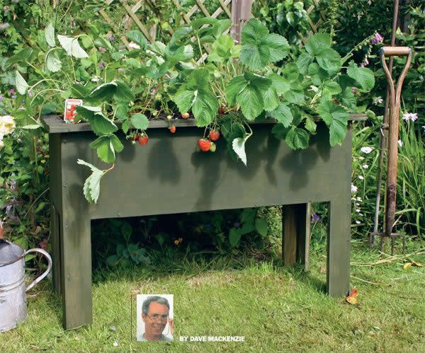 Raised bed strawberry plant planter